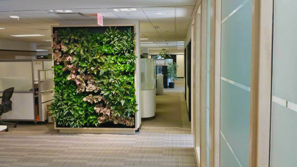 Living screen used for privacy and interior plantscaping for a corporate office in Boston, MA